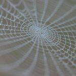 spider_web_med